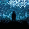 Nick Cave and the Bad Seeds Tickets Arena Birmingham